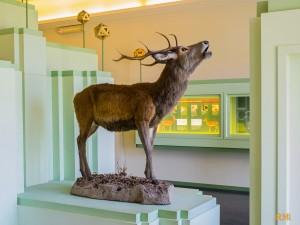 il cervo di Mesola